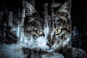黒猫と都会